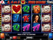 American Gigolo Online Slot